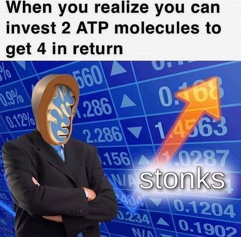 Font - When you realize you can invest 2 ATP molecules to get 4 in return 560 286 0468 2.286 14563 .156 0287 W stonks 0.9% 0.12% 82 0.1204 0.234 0.1902 213 N/A