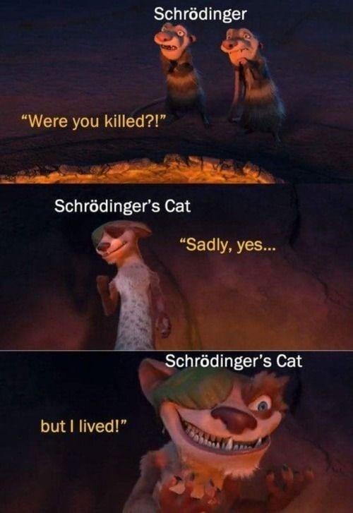 """Poster - Schrödinger """"Were you killed?!"""" Schrödinger's Cat """"Sadly, yes... Schrödinger's Cat but I lived!"""""""