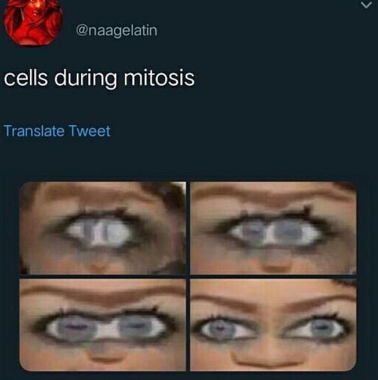 Eyebrow - @naagelatin cells during mitosis Translate Tweet