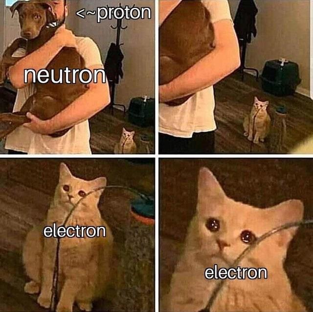 Cat - proton neutron electron electron