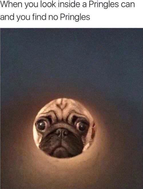 Pug - When you look inside a Pringles can and you find no Pringles