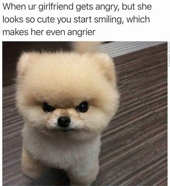 Mammal - When ur girlfriend gets angry, but she looks so cute you start smiling, which makes her even angrier