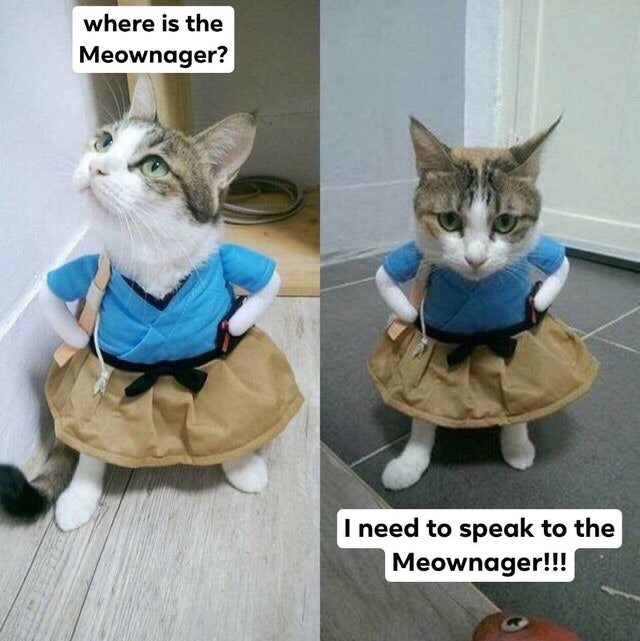 Cat - where is the Meownager? I need to speak to the Meownager!!!