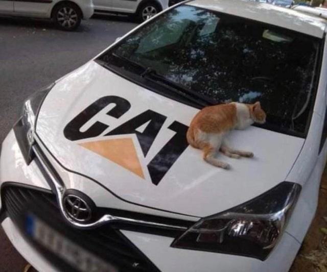 Motor vehicle - CA