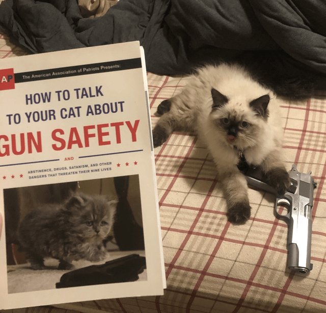 Cat - AP The American Association of Patriots Presents: HOW TO TALK TO YOUR CAT ABOUT GUN SAFETY AND ABSTINENCE, DRUGS, SATANISM, AND OTHER DANGERS THAT THREATEN THEIR NINE LIVES