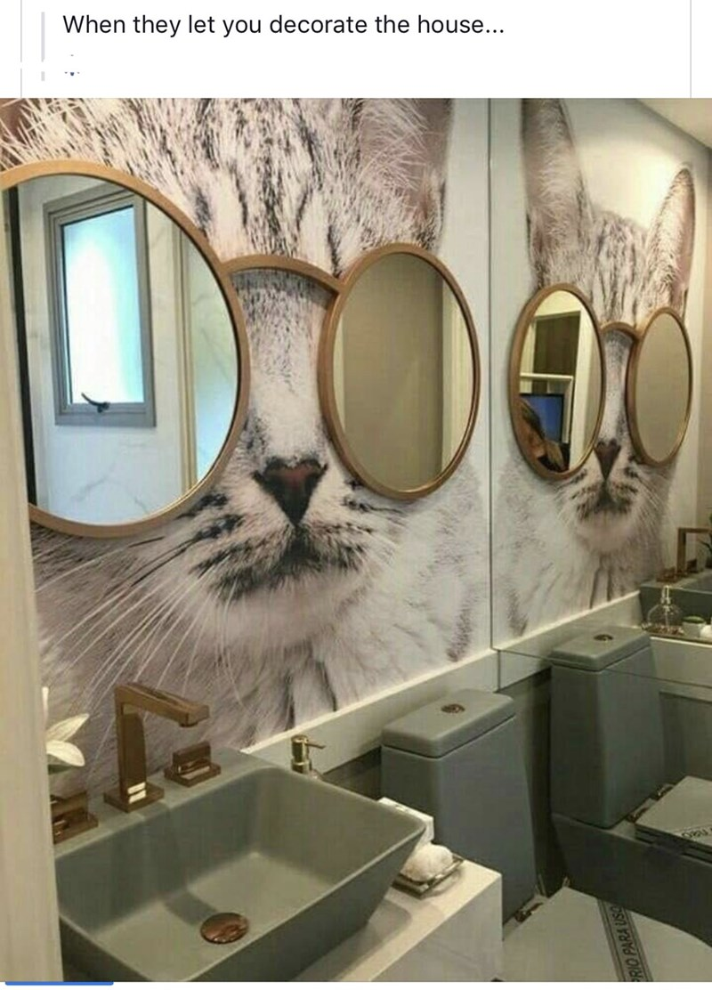 cool decor Cats funny - 9387446784