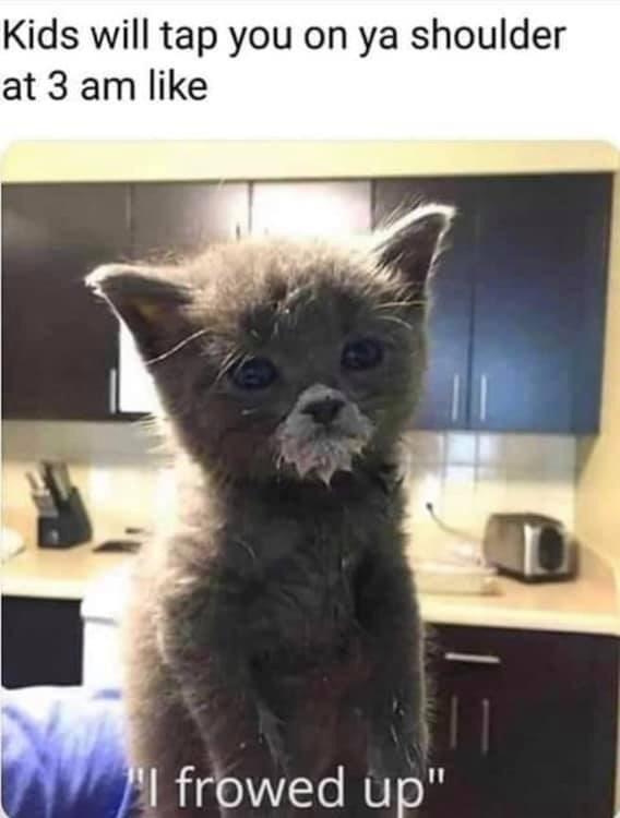 cute Memes Cats funny - 9387447552