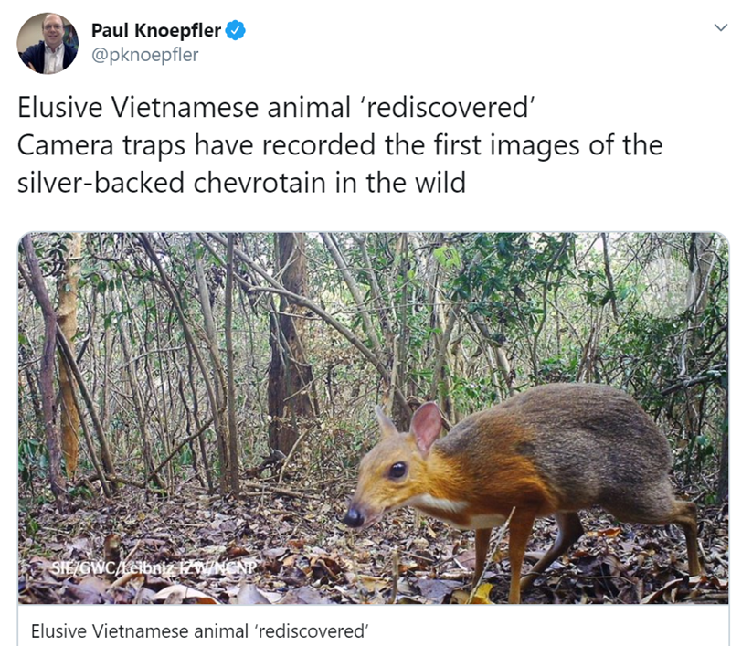 Nature - Paul Knoepfler @pknoepfler Elusive Vietnamese animal 'rediscovered' Camera traps have recorded the first images of the silver-backed chevrotain in the wild SIL/GWCebniz Elusive Vietnamese animal 'rediscovered'