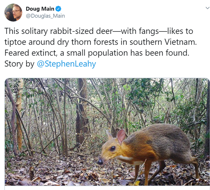 Wildlife - Doug Main @Douglas_Main This solitary rabbit-sized deer-with fangs-likes to tiptoe around dry thorn forests in southern Vietnam. Feared extinct, a small population has been found. Story by @Stephen Leahy