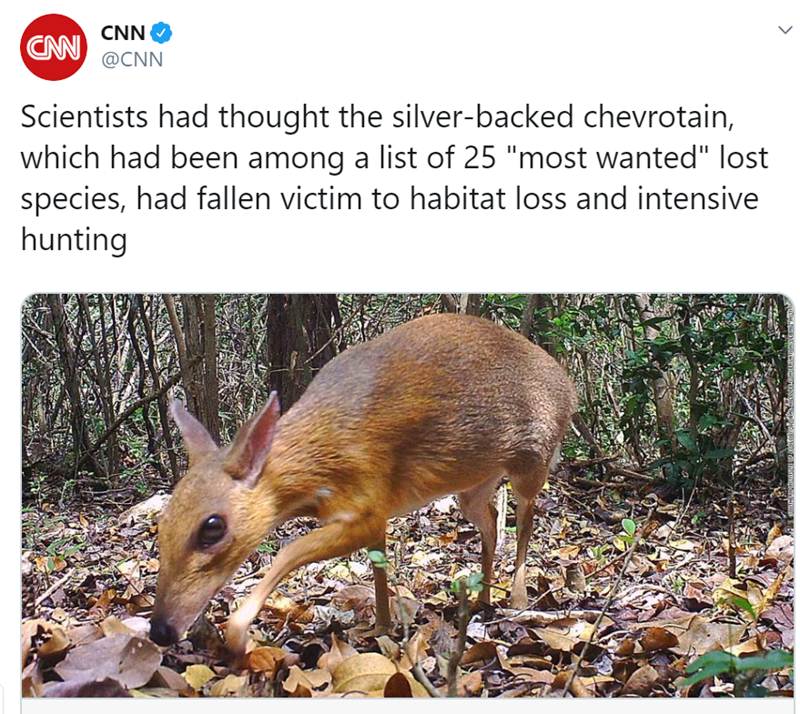 "Vertebrate - CNN CAN @CNN Scientists had thought the silver-backed chevrotain, which had been among a list of 25 ""most wanted"" lost species, had fallen victim to habitat loss and intensive hunting"