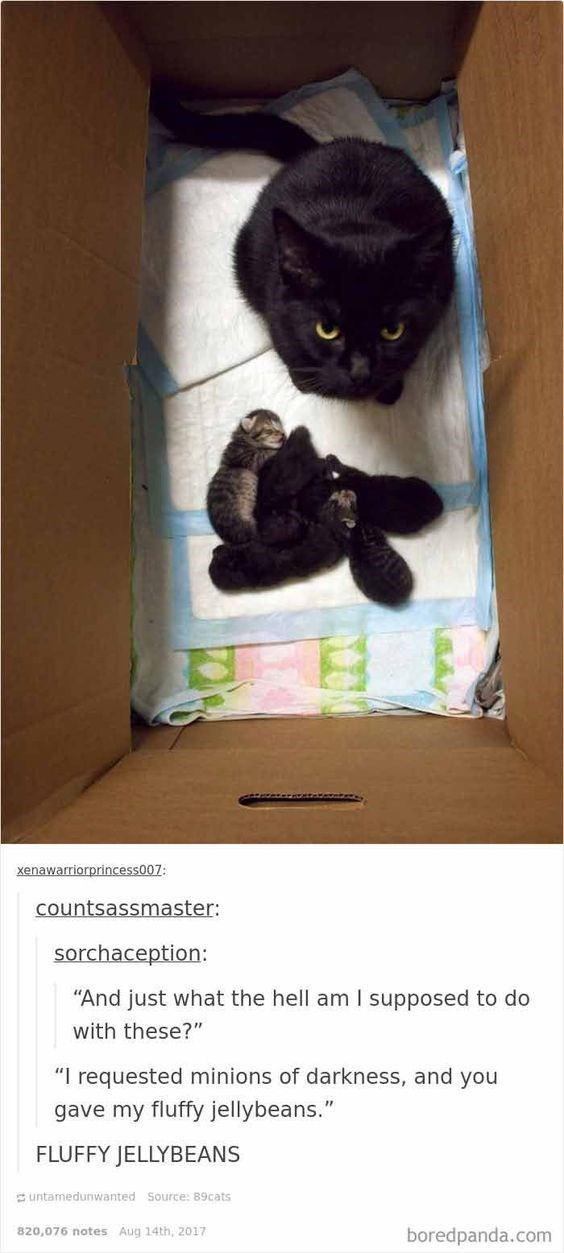"Cat - xenawarriorprincess007: countsassmaster: sorchaception: ""And just what the hell am I supposed to do with these?"" ""I requested minions of darkness, and you gave my fluffy jellybeans."" FLUFFY JELLYBEANS untamedunwanted Source: 89cats 820,076 notes Aug 14th, 2017 boredpanda.com"