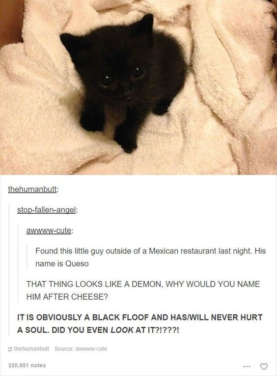 Canidae - thehumanbutt stop-fallen-angel: awwww.cute: Found this little guy outside of a Mexican restaurant last night. His name is Queso THAT THING LOOKS LIKE A DEMON, WHY WOULD YOU NAME HIM AFTER CHEESE? IT IS OBVIOUSLY A BLACK FLOOF AND HAS/WILL NEVER HURT A SOUL. DID YOU EVEN LOOK AT IT?!???! thehumanbutt Source: awwww-cute 220,951 notes