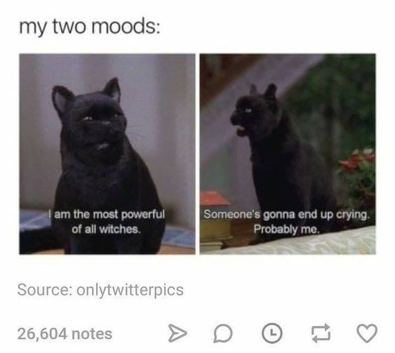 Felidae - my two moods: Someone's gonna end up crying. Probably me am the most powerful of all witches. Source: onlytwitterpics 26,604 notes