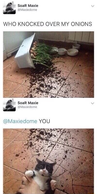 Tile - SoaR Maxie @Maxiedome WHO KNOCKED OVER MY ONIONS SoaR Maxie @Maxiedome @Maxiedome YOU