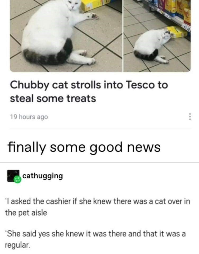 Text - £1.10 Chubby cat strolls into Tesco to steal some treats 19 hours ago finally some good news cathugging 'I asked the cashier if she knew there was a cat over in the pet aisle 'She said yes she knew it was there and that it was a regular.