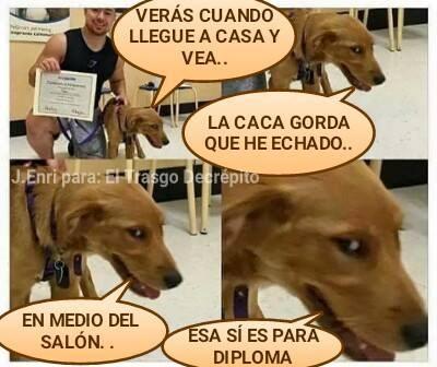 gatos bromas perros Memes listas animales - 938757