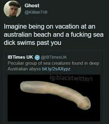 Flatworm - Ghost @KillianTrill Imagine being on vacation at an australian beach and a fucking sea dick swims past you IBTimes UK@IBTimesUK Peculiar group of sea creatures found in deep Australian abyss bit.ly/2sAXypz ig:blacktwitter1