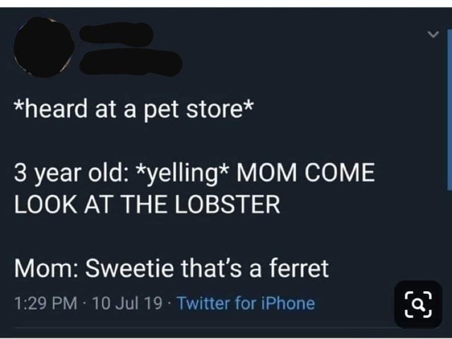 Text - *heard at a pet store* 3 year old: *yelling* MOM COME LOOK AT THE LOBSTER Mom: Sweetie that's a ferret 1:29 PM 10 Jul 19 Twitter for iPhone