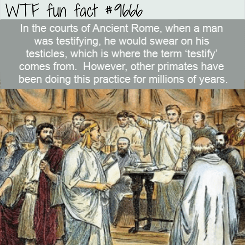 Holy places - WTF fun fact #%bb In the courts of Ancient Rome, when a man was testifying, he would swear on his testicles, which is where the term 'testify comes from. However, other primates have been doing this practice for millions of years.
