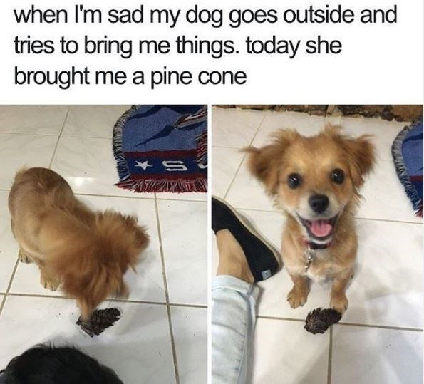 Dog - when I'm sad my dog goes outside and tries to bring me things. today she brought me a pine cone S