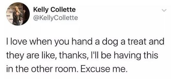 Text - Kelly Collette @KellyCollette I love when you hand a dog a treat and they are like, thanks, I'll be having this in the other room. Excuse me.
