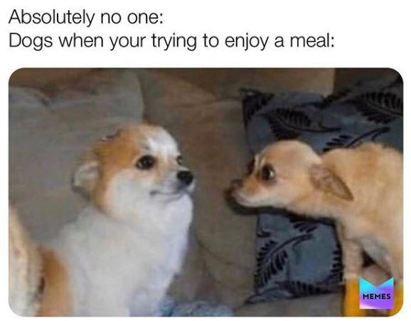 Dog - Absolutely no one: Dogs when your trying to enjoy a meal: MEMES