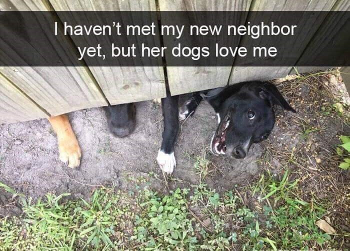 Canidae - T haven't met my new neighbor yet, but her dogs love me