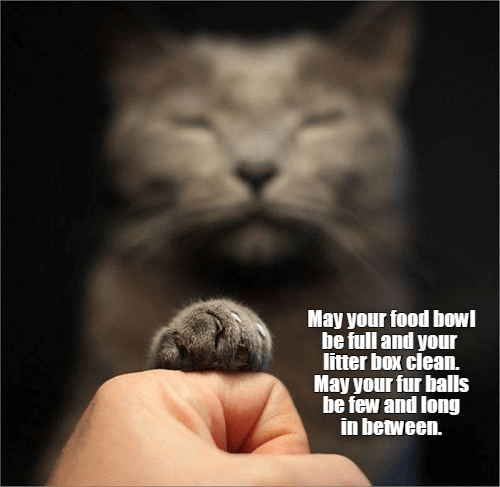 Cat - May your food bowl be full and your litter box clean. May your fur bals be few and long in between.