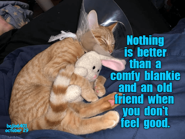Cat - Nothing is better than a comfy blankie and an old friend when you don't feel good. bajio6401 october 29