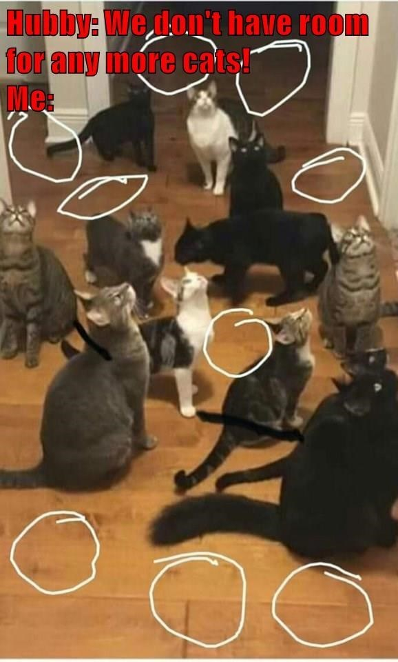 Photo caption - Hubby: We don't have room for any more cats Me