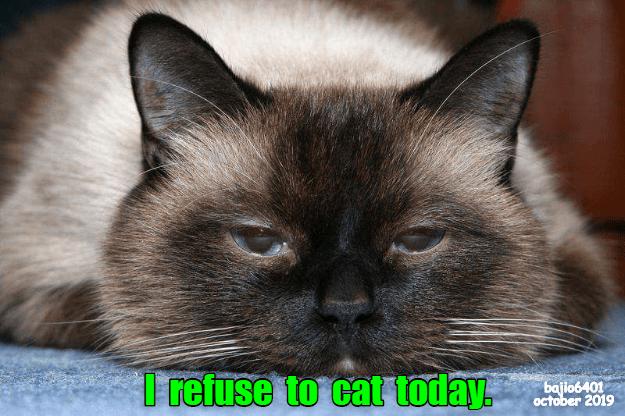 Cat - I refuse to cat today. bajio6401 october 2019