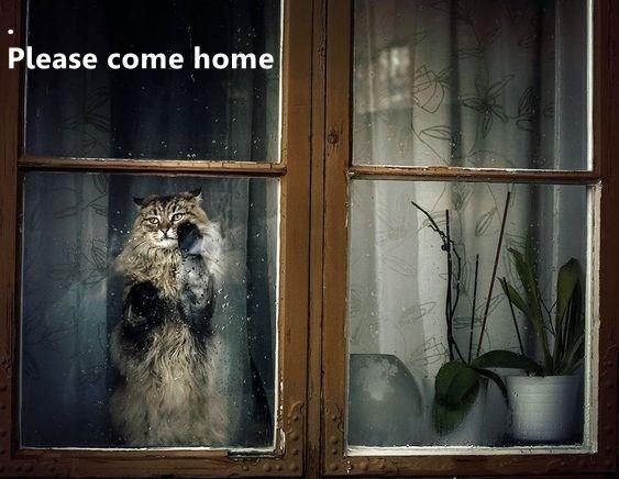 Adaptation - Please come home