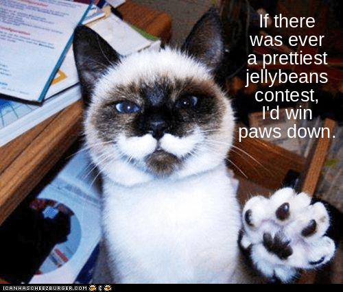 Cat - If there was ever a prettiest jellybeans contest, I'd win paws down. ICANHSCHEE2EURGER cOM