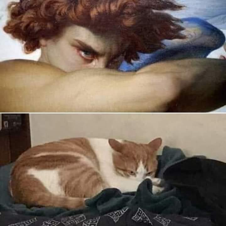 cat memes - 9388071680