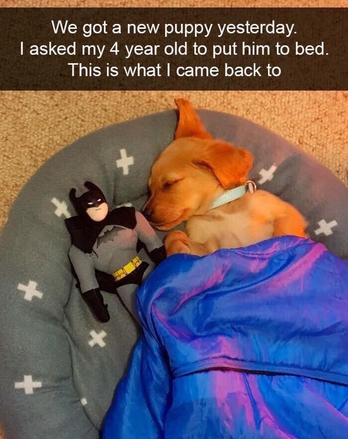 Canidae - We got a new puppy yesterday. I asked my 4 year old to put him to bed. This is what I came back to