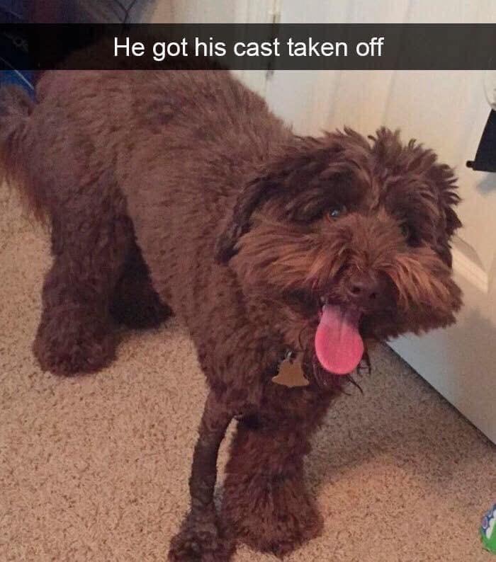 Dog - He got his cast taken off