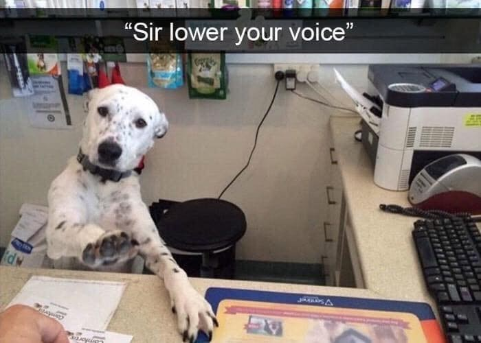 """Mammal - """"Sir lower your voice"""" P A"""