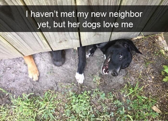 Dog breed - T haven't met my new neighbor yet, but her dogs love me