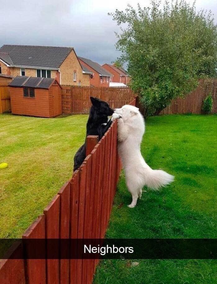 Dog - Neighbors