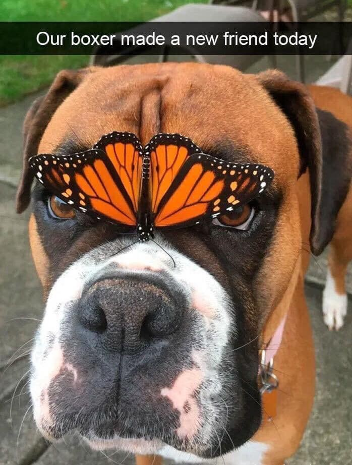 Vertebrate - Our boxer made a new friend today