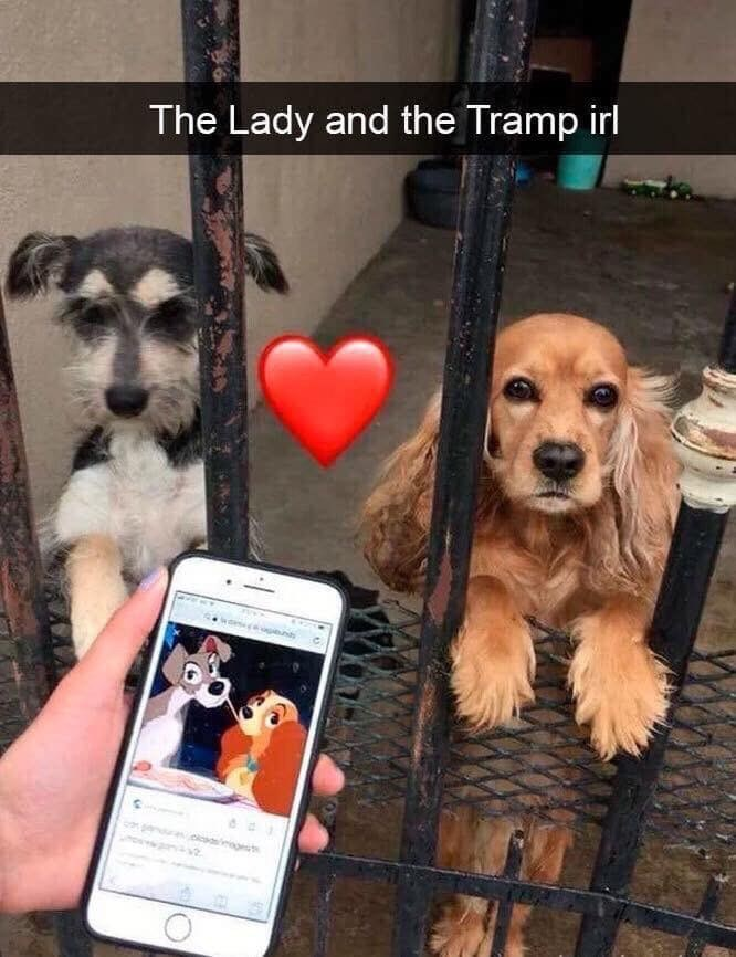 Dog - The Lady and the Tramp irl gt