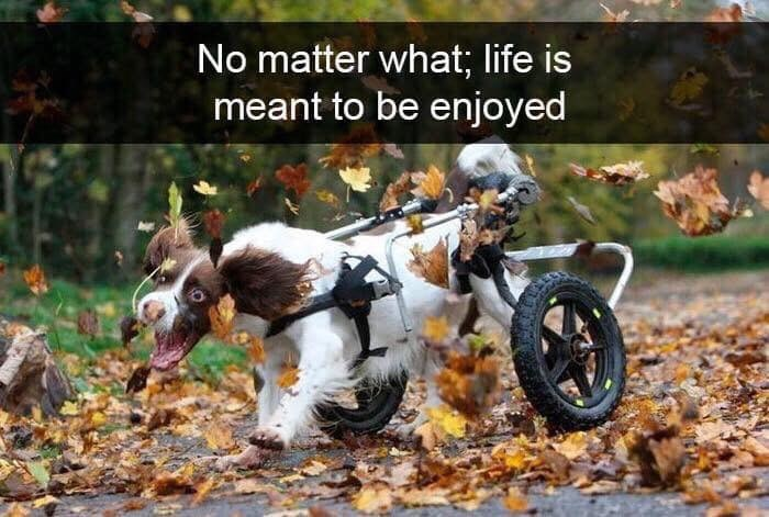 Vehicle - No matter what; life is meant to be enjoyed