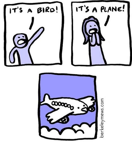 Rectangle - IT'S A PLANE! IT'S A BIRD! berkeleymews.com