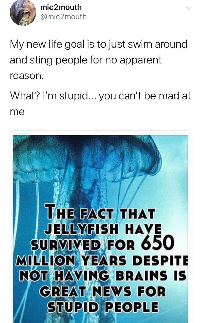 Text - mic2mouth @mic2mouth My new life goal is to just swim around and sting people for no apparent reason What? I'm stupid... you can't be mad at me THE FACT THAT JELLYFISH HAYE SURVIYED FOR 650 MILLION YEARS DESPITE NOT HAVING BRAINS IS GREAT NEWS FOR STUPID PEOPLE