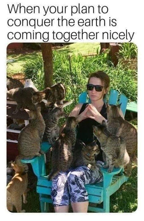 cat memes - 9388606464
