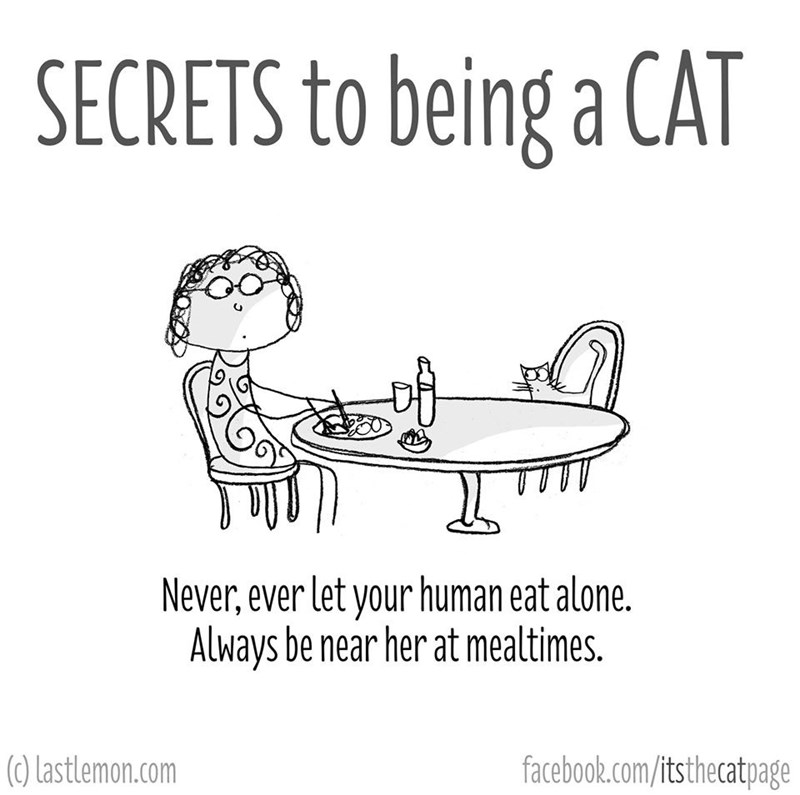 Text - SECRETS to being a CAT Never,ever let your human eat alone. Always be near her at mealtimes. (0) Lastlemon.com facebook.com/itsthecatpage
