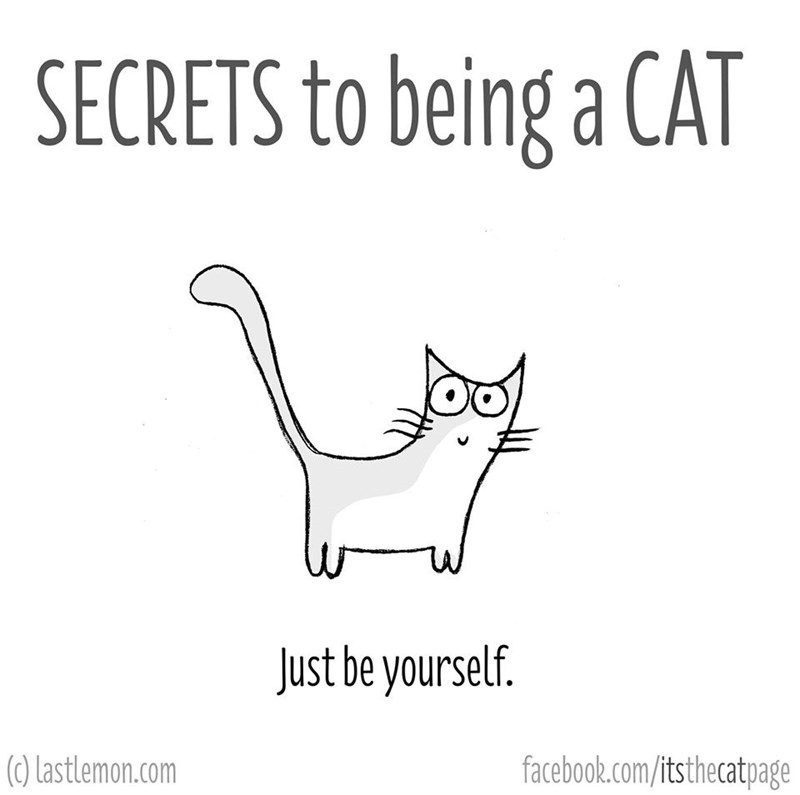 White - SECRETS to being a CAT Just be yourself. (0) Lastlemon.com facebook.com/itsthecatpage