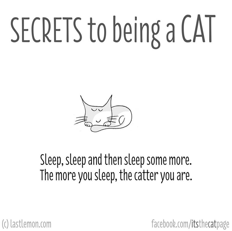 Text - SECRETS to being a CAT Sleep,sleep and then sleep some more. The more you sleep, the catter you are. (0) Lastlemon.com facebook.com/itsthecatpage