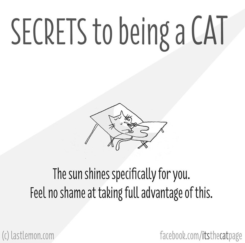 Text - SECRETS to being a CAT The sun shines specifically for you. Feel no shame at taking full advantage of this. facebook.com/itsthecatpage (C) Lastlemon.com
