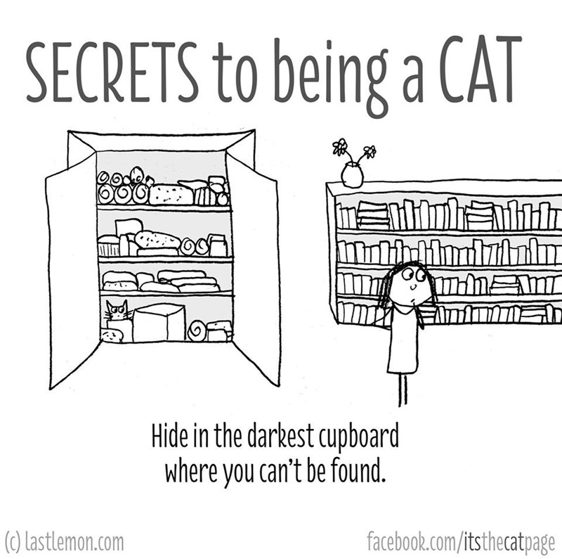Text - SECRETS to being a CAT Hide in the darkest cupboard where you can't be found. (0) Lastlemon.com facebook.com/itsthecatpage
